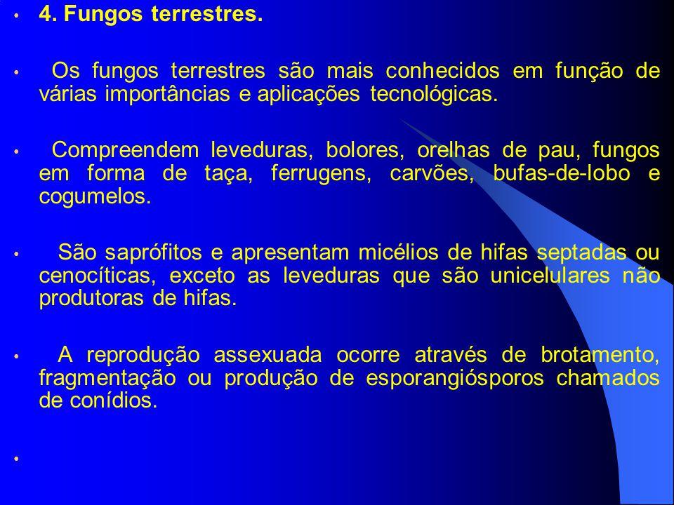 4. Fungos terrestres. Os fungos terrestres são mais conhecidos em função de várias importâncias e aplicações tecnológicas.