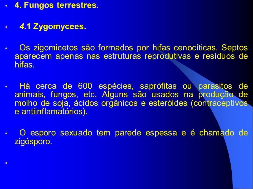 4. Fungos terrestres. 4.1 Zygomycees.