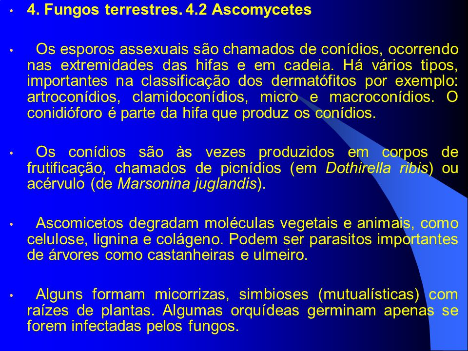 4. Fungos terrestres. 4.2 Ascomycetes