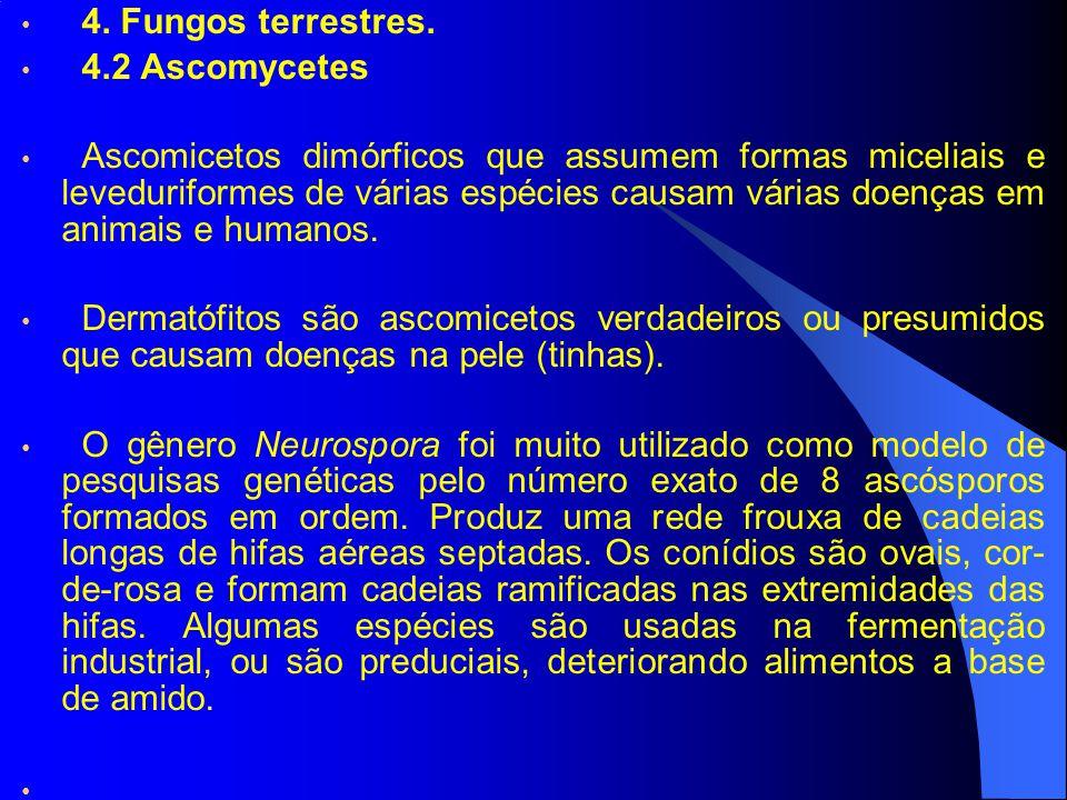 4. Fungos terrestres. 4.2 Ascomycetes.