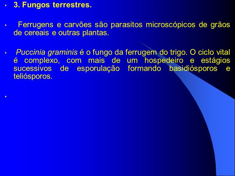 3. Fungos terrestres. Ferrugens e carvões são parasitos microscópicos de grãos de cereais e outras plantas.
