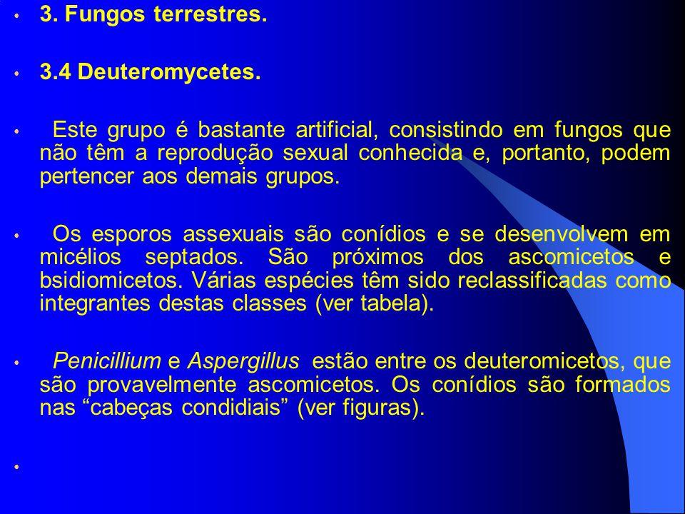3. Fungos terrestres. 3.4 Deuteromycetes.