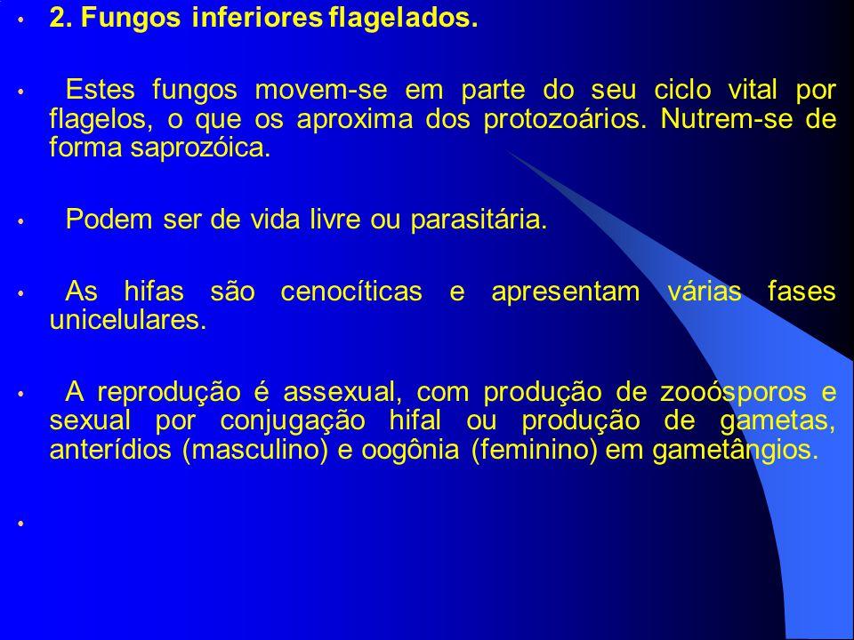 2. Fungos inferiores flagelados.