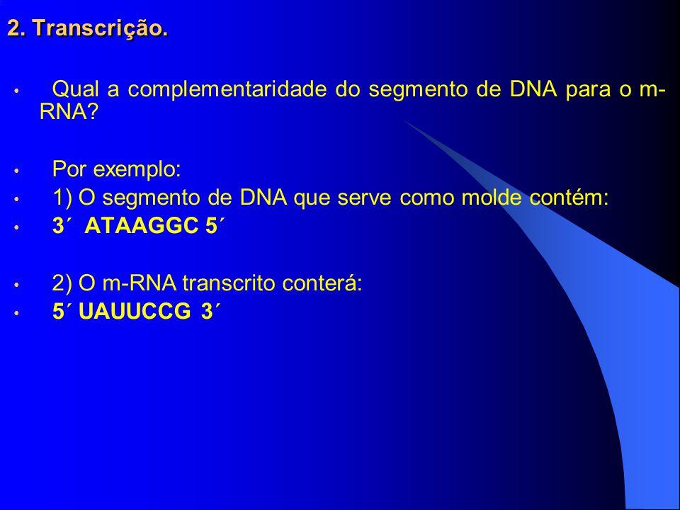 2. Transcrição. Qual a complementaridade do segmento de DNA para o m-RNA Por exemplo: 1) O segmento de DNA que serve como molde contém: