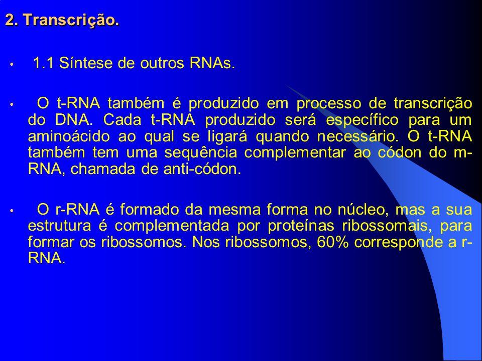2. Transcrição. 1.1 Síntese de outros RNAs.