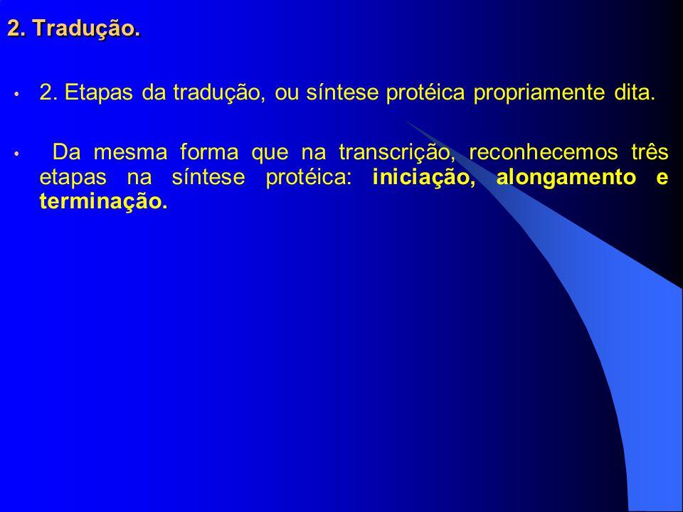 2. Tradução. 2. Etapas da tradução, ou síntese protéica propriamente dita.