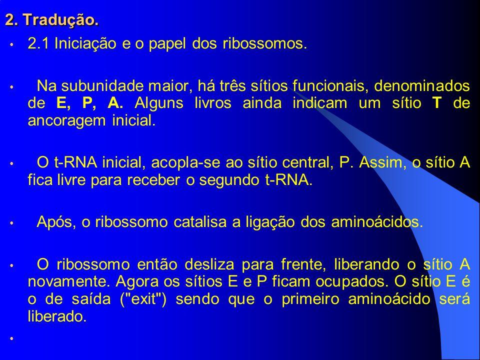 2. Tradução. 2.1 Iniciação e o papel dos ribossomos.