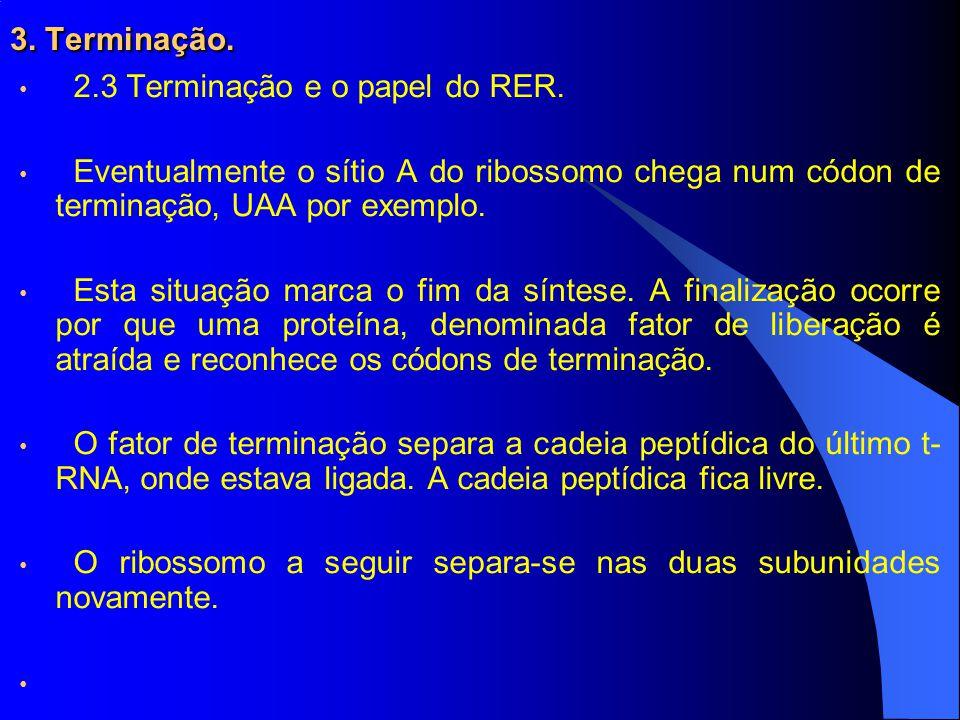 3. Terminação. 2.3 Terminação e o papel do RER. Eventualmente o sítio A do ribossomo chega num códon de terminação, UAA por exemplo.