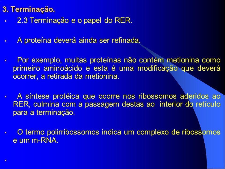3. Terminação. 2.3 Terminação e o papel do RER. A proteína deverá ainda ser refinada.