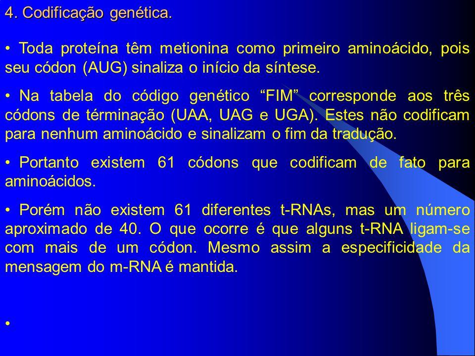 4. Codificação genética. Toda proteína têm metionina como primeiro aminoácido, pois seu códon (AUG) sinaliza o início da síntese.