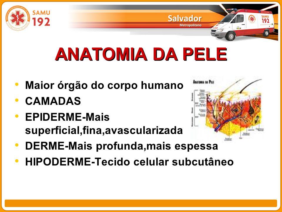 ANATOMIA DA PELE Maior órgão do corpo humano CAMADAS