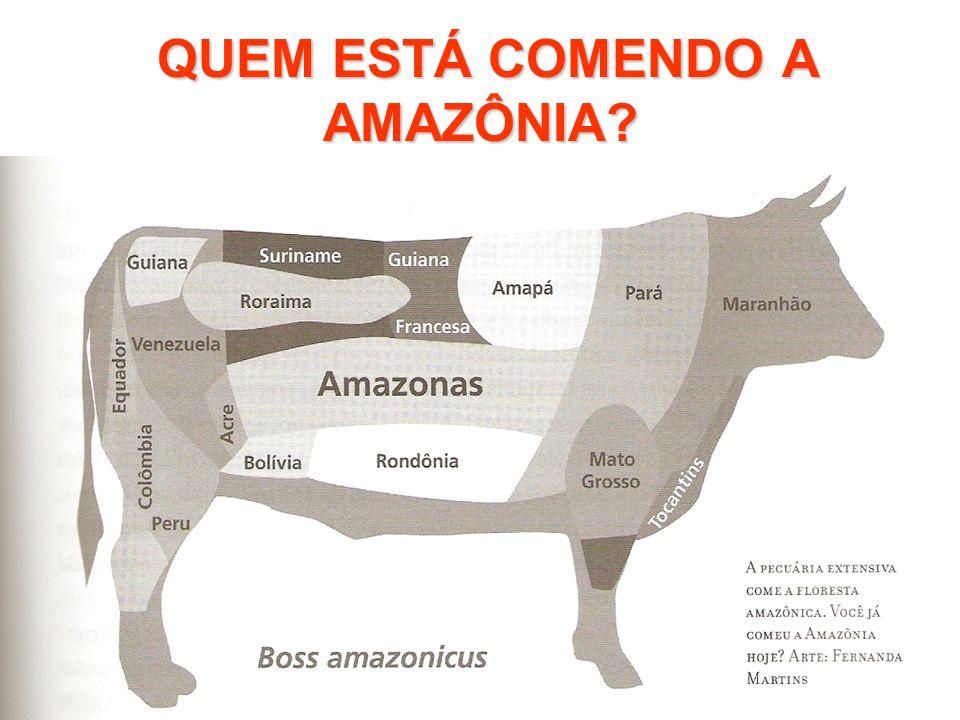 QUEM ESTÁ COMENDO A AMAZÔNIA