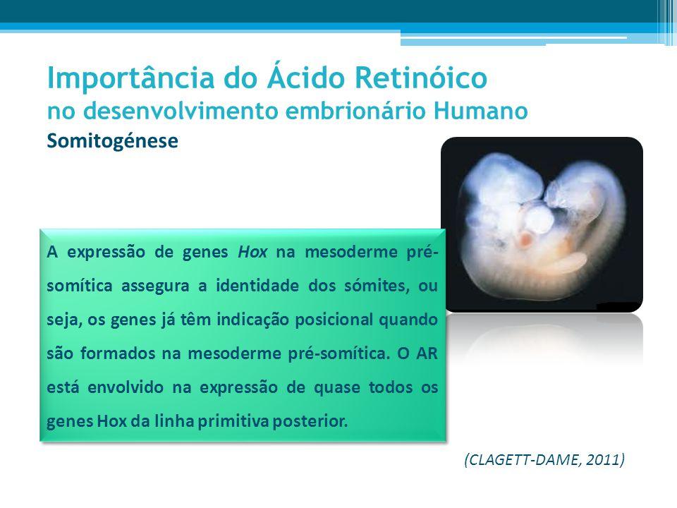 Importância do Ácido Retinóico no desenvolvimento embrionário Humano