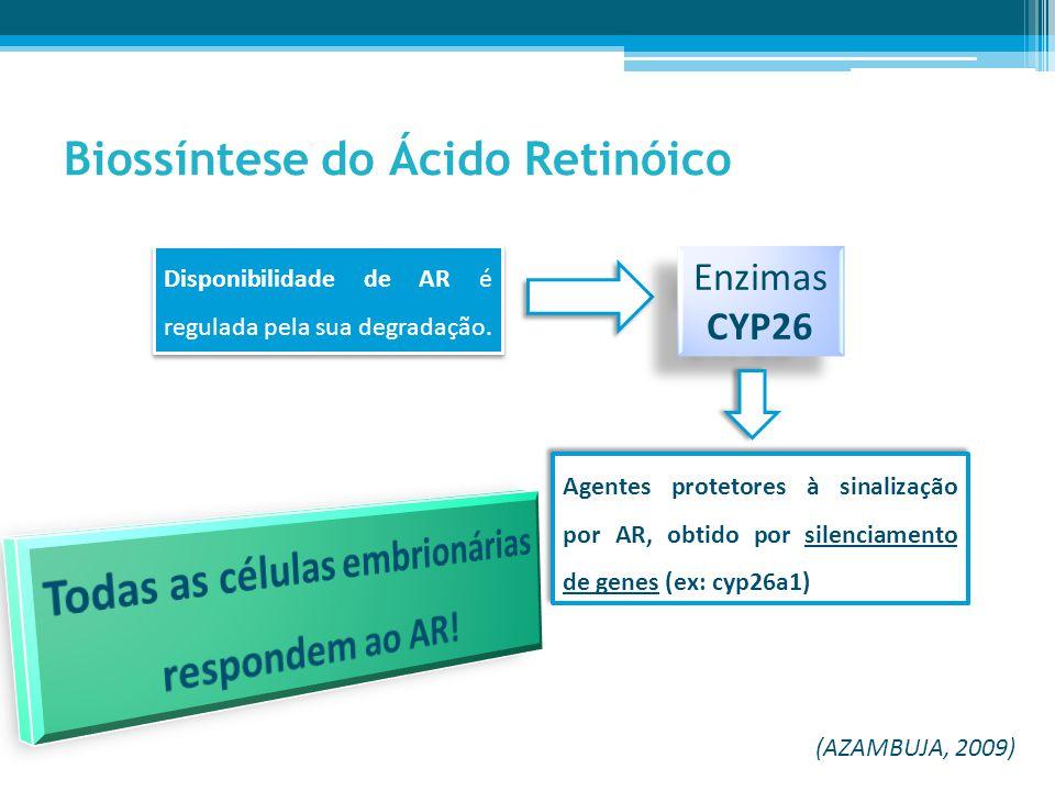 Biossíntese do Ácido Retinóico