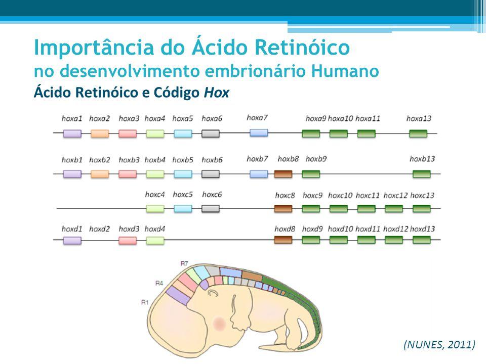 Ácido Retinóico e Código Hox