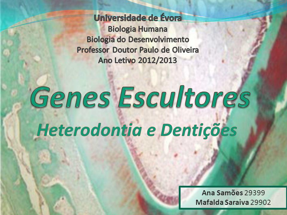 Heterodontia e Dentições