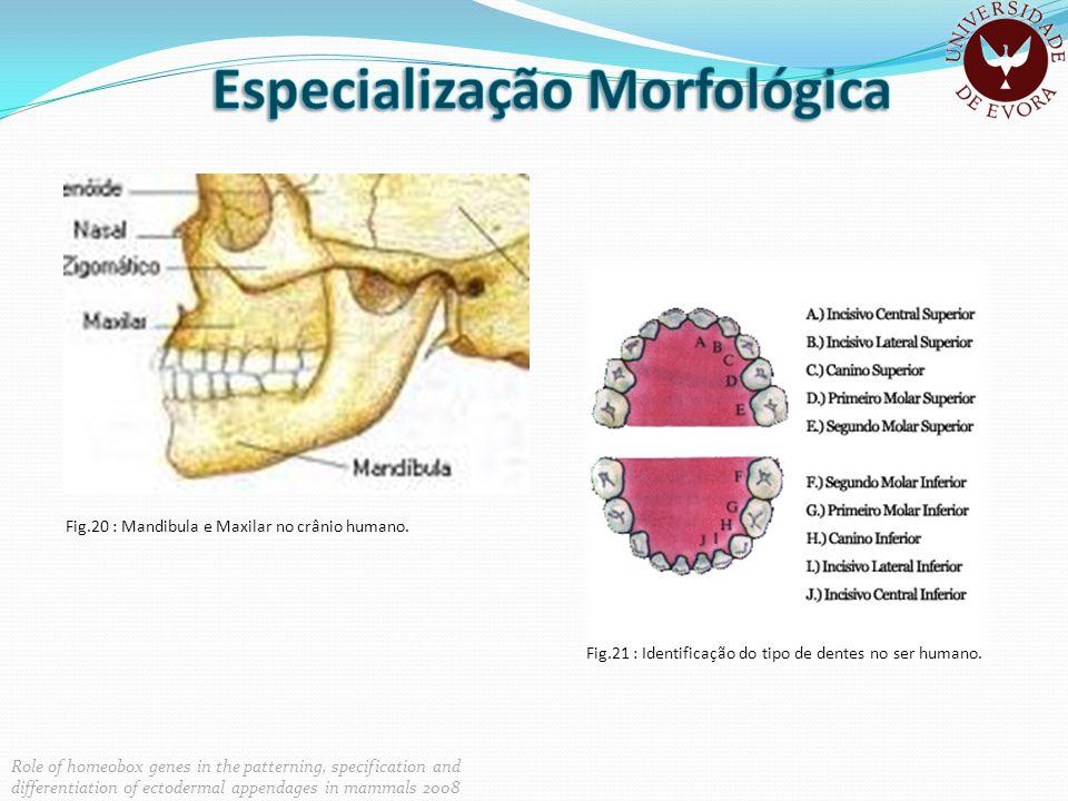 Especialização Morfológica