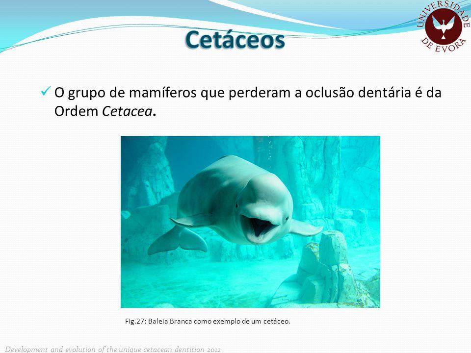 Cetáceos O grupo de mamíferos que perderam a oclusão dentária é da Ordem Cetacea.