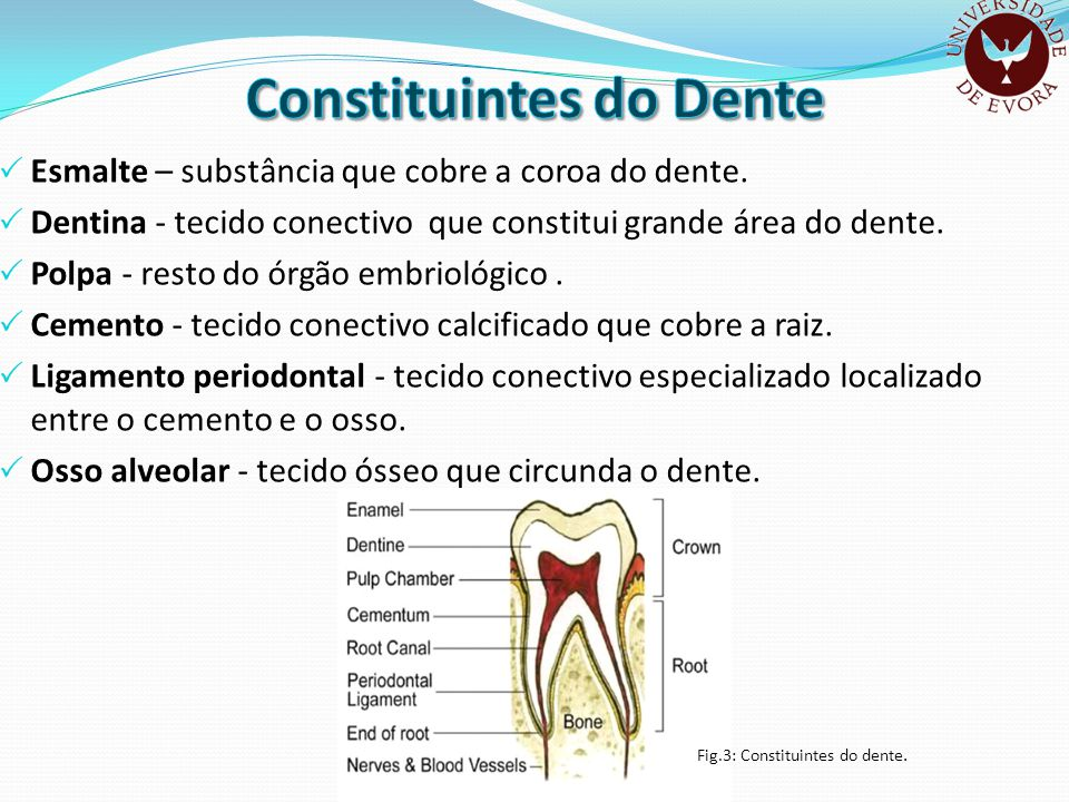 Constituintes do Dente