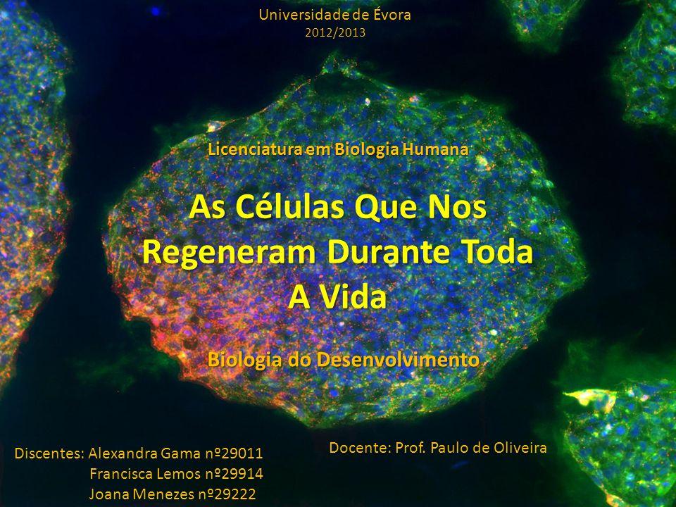 As Células Que Nos Regeneram Durante Toda A Vida
