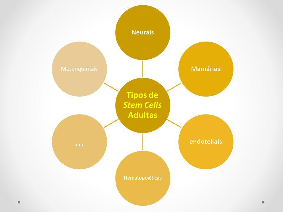 Tipos de Stem Cells Adultas