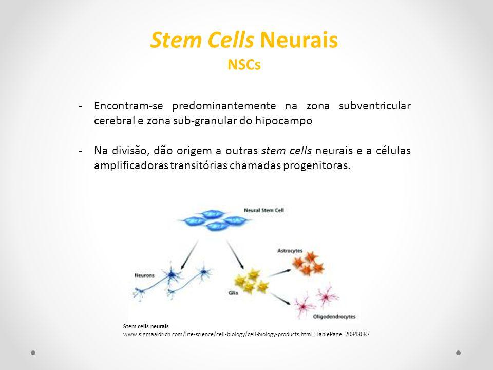 Stem Cells Neurais NSCs