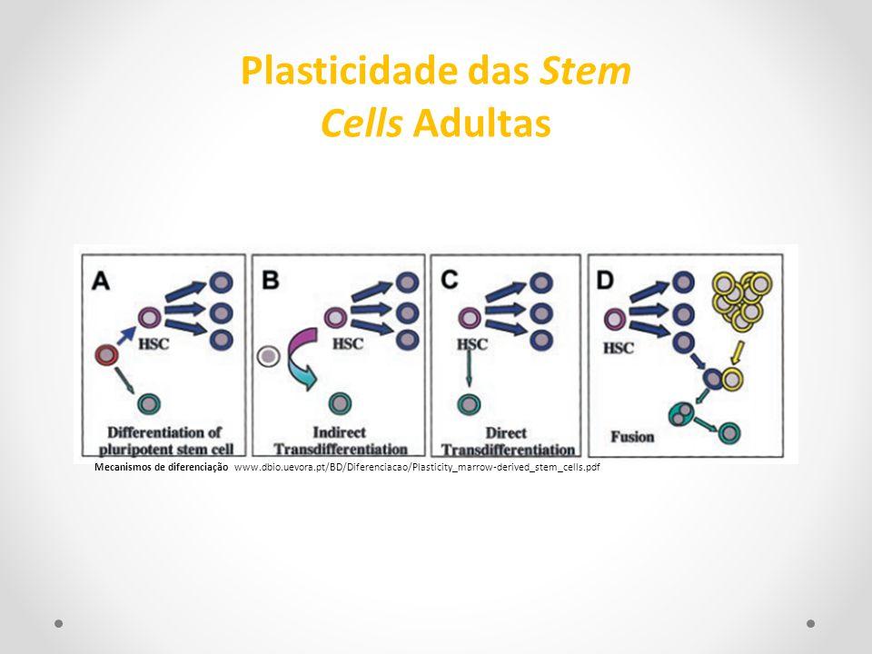 Plasticidade das Stem Cells Adultas