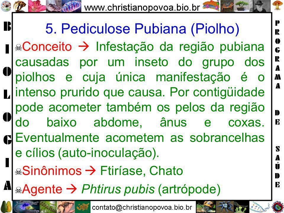 5. Pediculose Pubiana (Piolho)