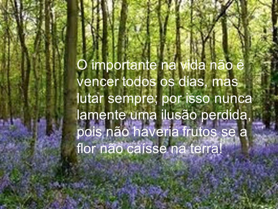 O importante na vida não é vencer todos os dias, mas lutar sempre; por isso nunca lamente uma ilusão perdida, pois não haveria frutos se a flor não caísse na terra!