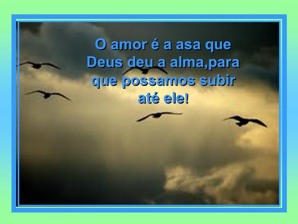 O amor é a asa que Deus deu a alma,para que possamos subir até ele!