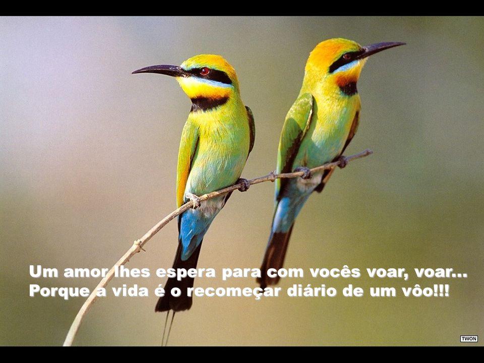 Um amor lhes espera para com vocês voar, voar...