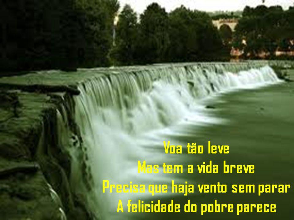 Voa tão leve Mas tem a vida breve Precisa que haja vento sem parar A felicidade do pobre parece