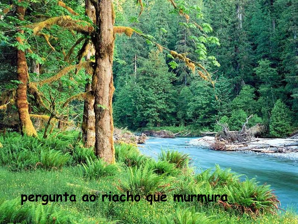 pergunta ao riacho que murmura