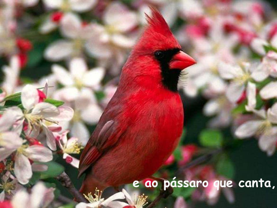 e ao pássaro que canta,