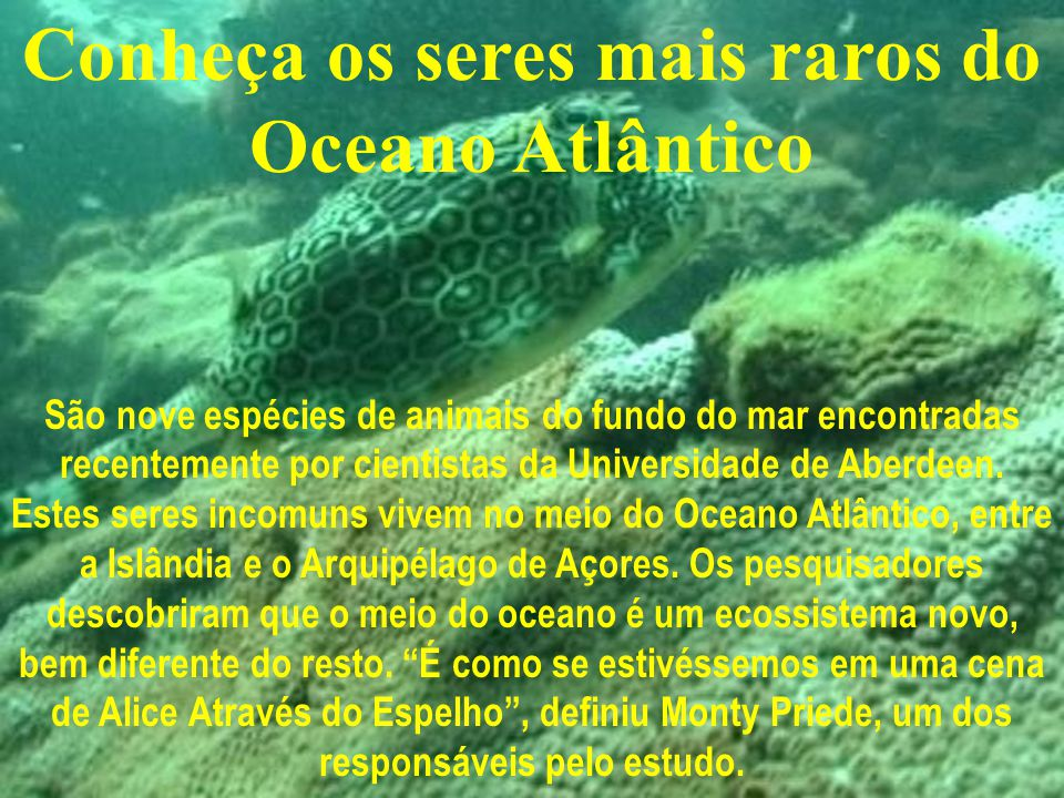 Conheça os seres mais raros do Oceano Atlântico