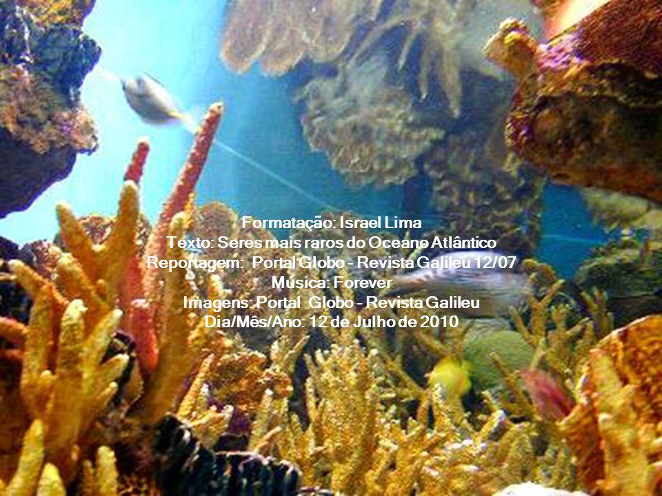 Formatação: Israel Lima Texto: Seres mais raros do Oceano Atlântico