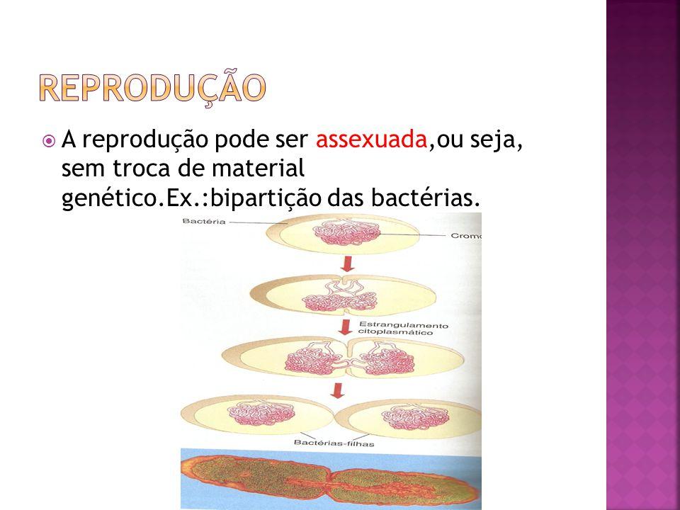 Reprodução A reprodução pode ser assexuada,ou seja, sem troca de material genético.Ex.:bipartição das bactérias.