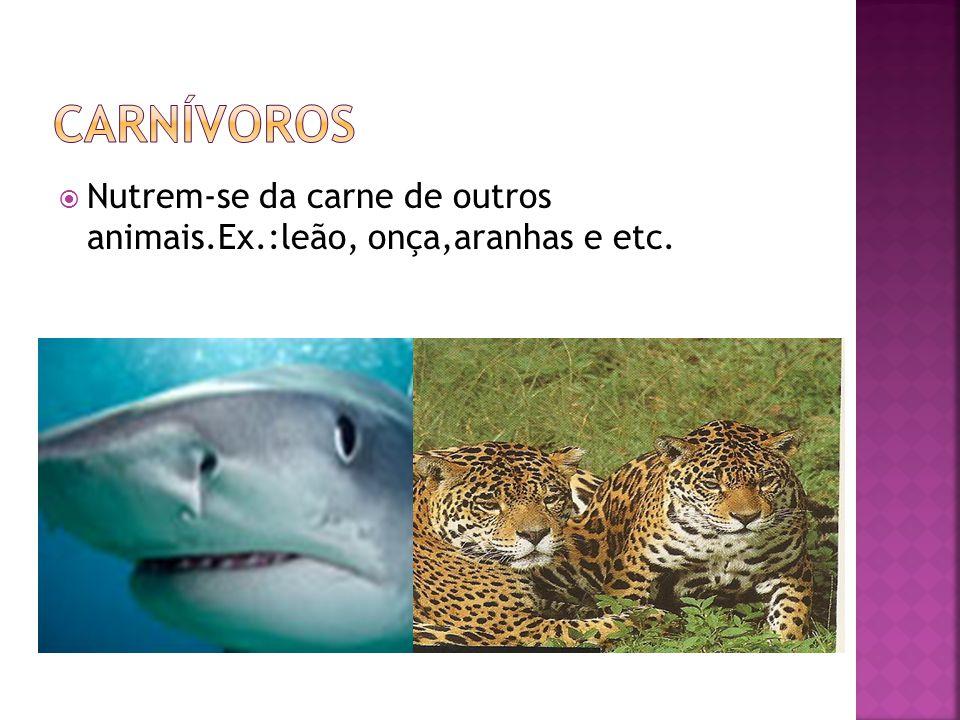 carnívoros Nutrem-se da carne de outros animais.Ex.:leão, onça,aranhas e etc.