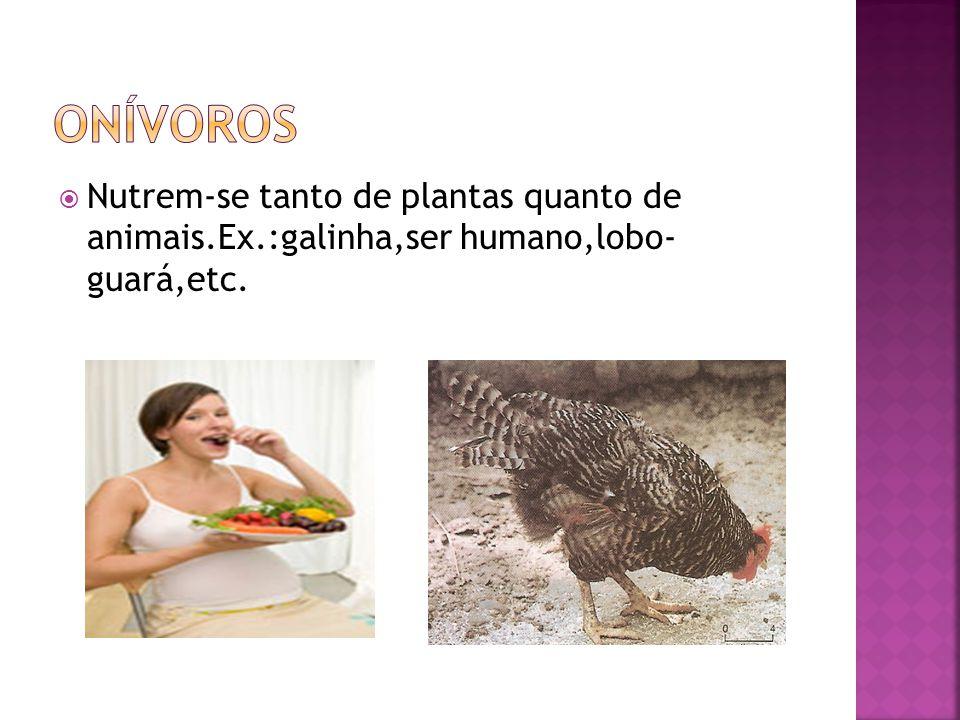 onívoros Nutrem-se tanto de plantas quanto de animais.Ex.:galinha,ser humano,lobo- guará,etc.