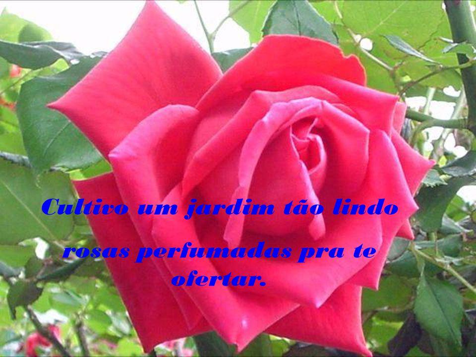 Cultivo um jardim tão lindo rosas perfumadas pra te ofertar.