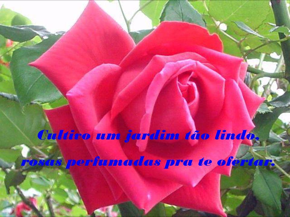 Cultivo um jardim tão lindo, rosas perfumadas pra te ofertar.