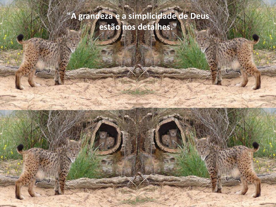 A grandeza e a simplicidade de Deus