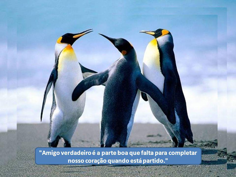 Amigo verdadeiro é a parte boa que falta para completar