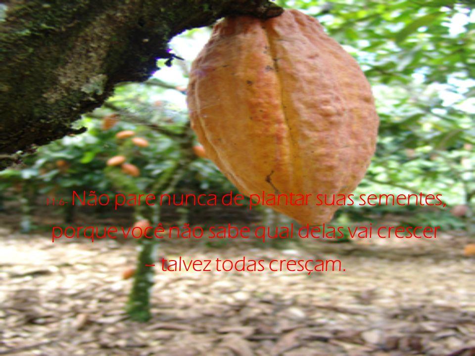 11:6- Não pare nunca de plantar suas sementes, porque você não sabe qual delas vai crescer