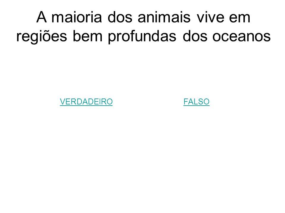 A maioria dos animais vive em regiões bem profundas dos oceanos