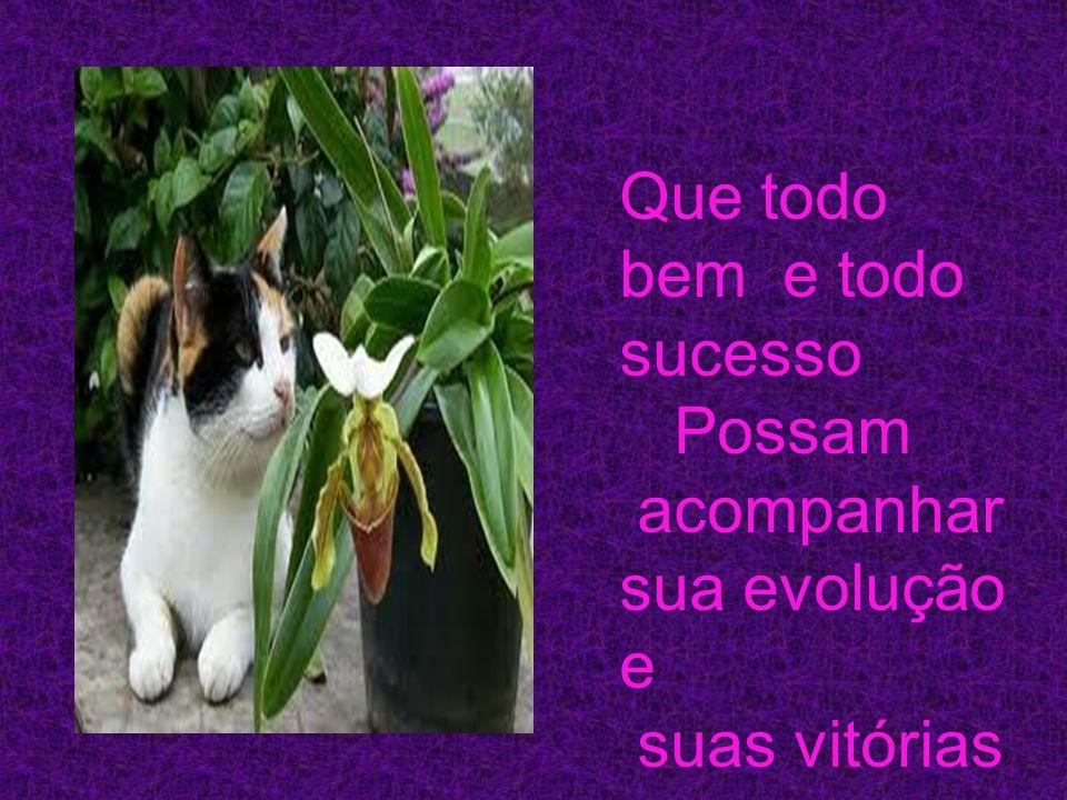 Que todo bem e todo sucesso Possam acompanhar sua evolução e