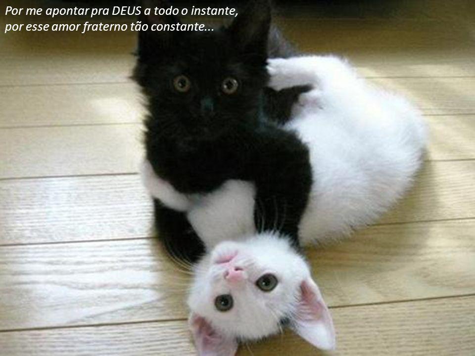 Por me apontar pra DEUS a todo o instante, por esse amor fraterno tão constante...