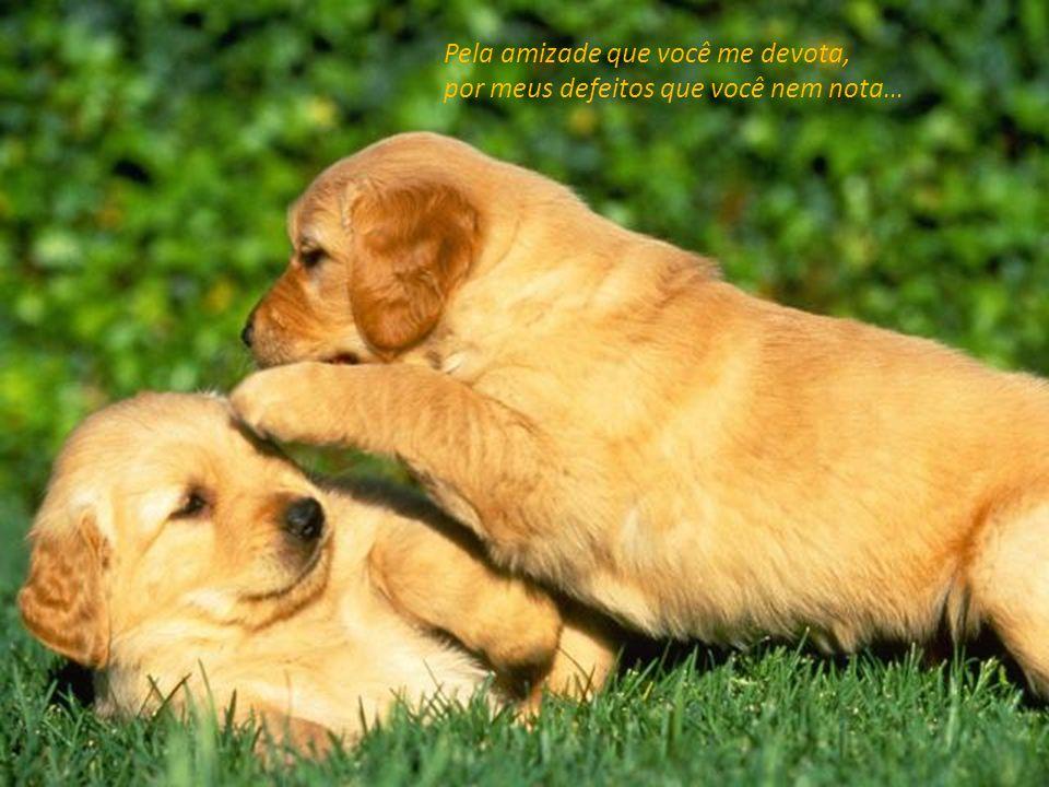 Pela amizade que você me devota, por meus defeitos que você nem nota...