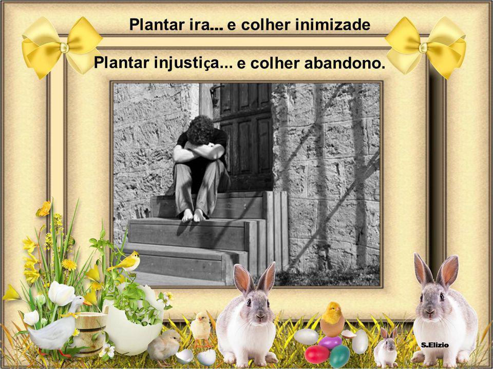 Plantar ira... ... e colher inimizade Plantar injustiça... e colher abandono.