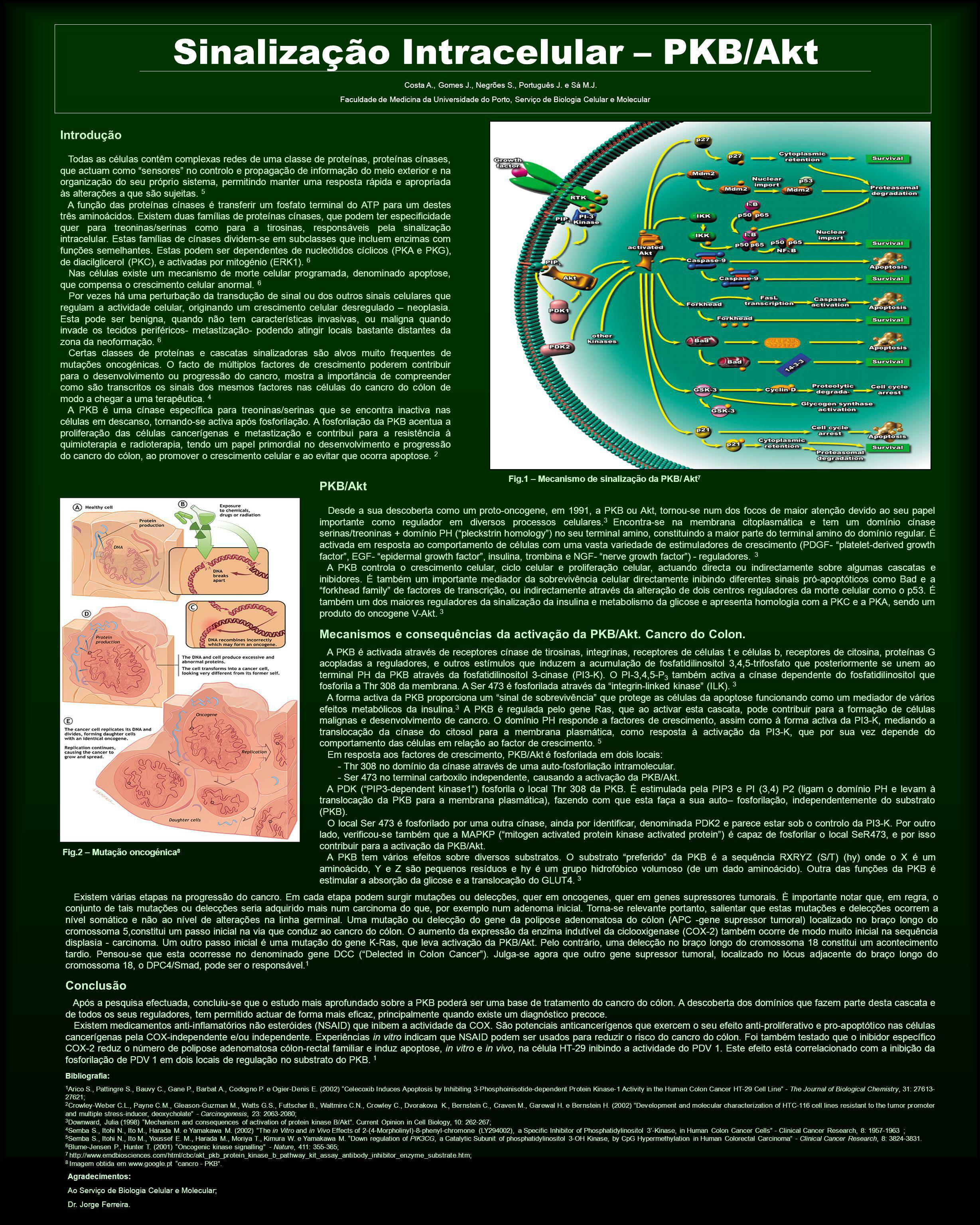 Sinalização Intracelular – PKB/Akt